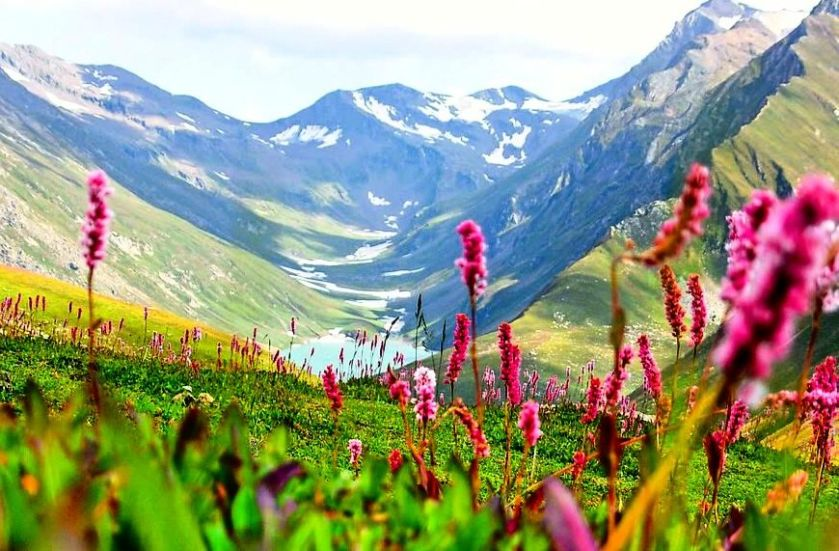 Kashmir_valley_beautiful_flowers